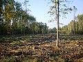 Kėdainių miškų urėdija - miškažudžių gauja.JPG