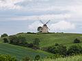 Kalletal - 2015-05-30 - Windmühle im LSG-3919-0043 (03).jpg