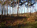Kalmthoutse Heide (62).JPG