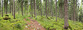 Kangasvuori nature trail - panorama.jpg