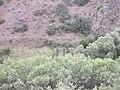 Karaboğaz - panoramio (3).jpg