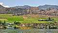 Kelowna Vineyards from the Okanagan Lake.jpg