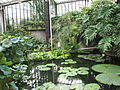 Kew Gardens - London - September 2008 (2955571756).jpg