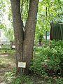 Kharkiv natural sanctuary Institute 22.JPG