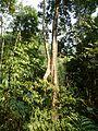 Khunkorn waterfall P1110743.JPG