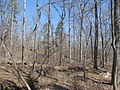 Kings Mountain National Military Park - South Carolina (8558885454) (2).jpg
