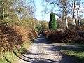 Kingsley Wood Road - geograph.org.uk - 274297.jpg