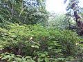 Kobe Municipal Arboretum in 2013-6-22 No,62.JPG