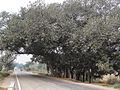Kosli, Haryana 123302, India - panoramio (21).jpg