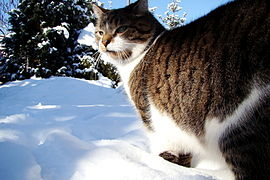 Kot w zimie.jpg