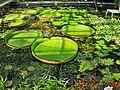 Kraków - ogród botaniczny;....jpg