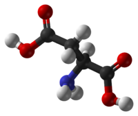 Ball and stick model of the aspartic acid molecule
