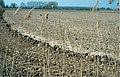 LPCC-705-Camp preparat per al cultiu d'arròs a La Gallinera.jpg