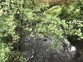 La Sereine à La Boisse en mai 2018.JPG