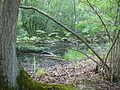 Langenfeld Nähe Haus Graven 0013.jpg