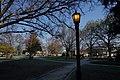 Lantern (201397299).jpeg