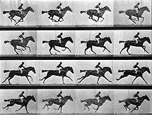 Sallie Gardner at a Gallop, come fu concepita in origine.Queste immagini fotografiche furono pubblicate per la prima volta a Philadelphia nel 1887.