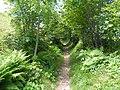 Le sentier à l'ombre - panoramio.jpg