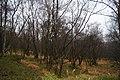 Leekfrith, UK - panoramio (1).jpg