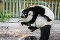 Lemur (26245102879).jpg
