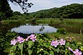 Lengshuikeng Eco Pond 冷水坑生態池 - panoramio (2).jpg