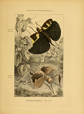 Description de l'image Les insectes (Pl. III) (6008127353).jpg.