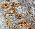 Lichen on Nunavut rocks -c.jpg
