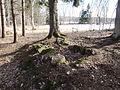 Linrötningsgrop i storhög RAÄ Skara 48, den 30 mars 2013b.JPG