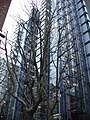 London - Fenchurch Place - panoramio.jpg