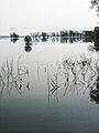 LonjskoPoljePoplavljeno.jpg