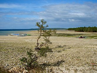 2013 Bohol earthquake - Raised sea bottom at Loon (the water used to extend to the mangroves at right)