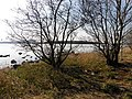 Lough Erne - geograph.org.uk - 1800185.jpg