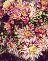 Lulet.jpg