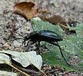 Lysy Mlyn, insect.JPG