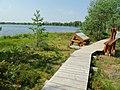 Mūšos tyrelis, takas prie Miknaičių ežero 2.JPG