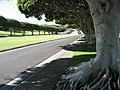 Main Drive in Punchbowl Cemetery - panoramio.jpg