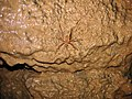 Mammoth Cave National Park Cricket.jpg