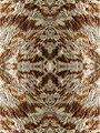 Mangifera indica20100320 04 pattern-2.jpg