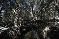 Mangroves of the LPPCHEA.jpg