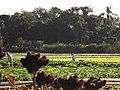 Manhã na Agroecologia Boos - panoramio.jpg