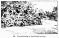 Manual of Gardening fig048.png