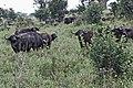 Manyara 2012 05 29 2118 (7482099854).jpg