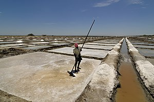 Salt evaporation pond - A salt pan worker in a salt evaporation pond in Tamil Nadu, India.