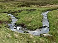 Meander, Loch Burn - geograph.org.uk - 441438.jpg