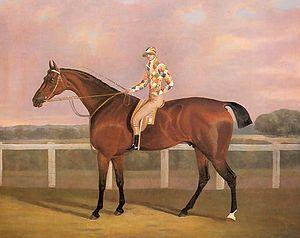 Memnon (horse) - Memnon by Clifton Tomson (1775-1828)