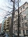 Meshchansky, CAO, Moscow 2019 - 3509.jpg
