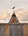 Metal Crow (14269139079).jpg