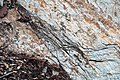 Metcalf Phyllite (Neoproterozoic; Laurel Creek Road outcrop, Great Smoky Mountains, Tennessee, USA) 15 (37148738665).jpg