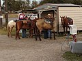 Mike's Country Corner - Duson, LA - Horse Parking.jpg
