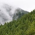Mist shrouding a forest (Unsplash).jpg